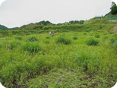 開始前のノア畑