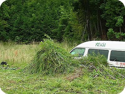 堆肥にする草