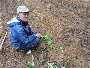 苗の植え方