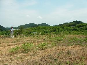 畑の周りの風景