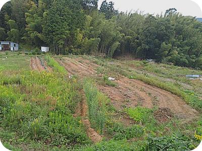 10/14のノア畑