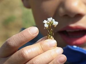 小さな花を手に