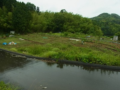雨のノア畑