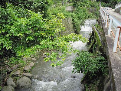 大雨の後の川