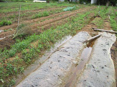 大雨の後の畑