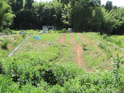 草刈り畑全体図