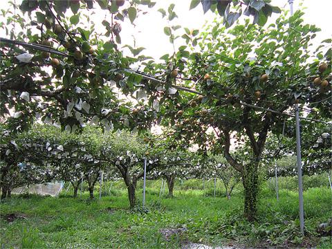 菊井果樹園